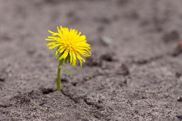 새싹은 모래를 통해 길을 만든다