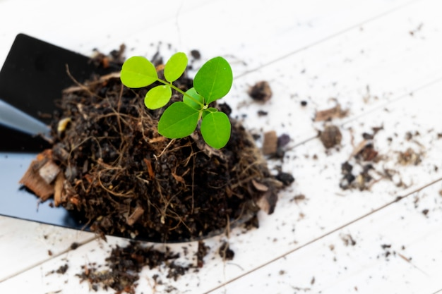 Sprout plant and soil holding in shovel. tree growing and prevent by human.