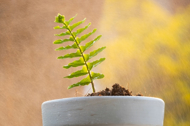 Sprout plant and soil in tree pot with water spray on background.