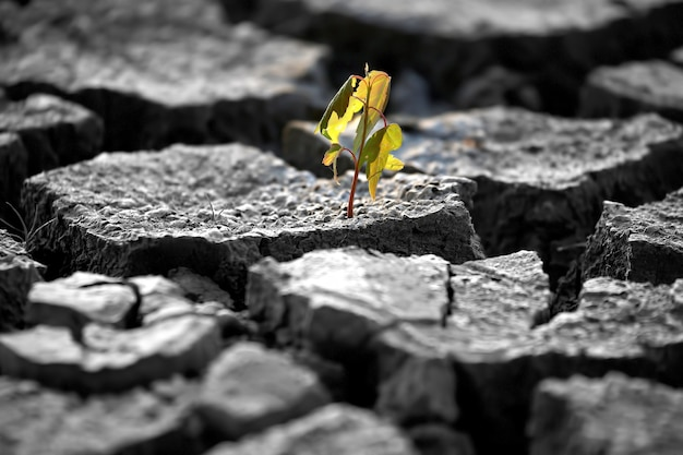 Sprout plants growing on very dry cracked earth