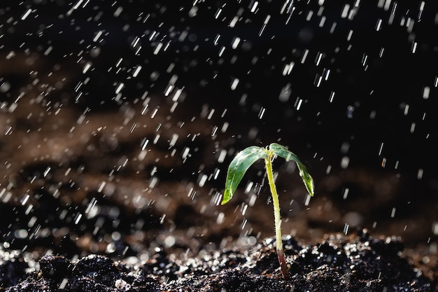 Sprout of a young plant in the rain