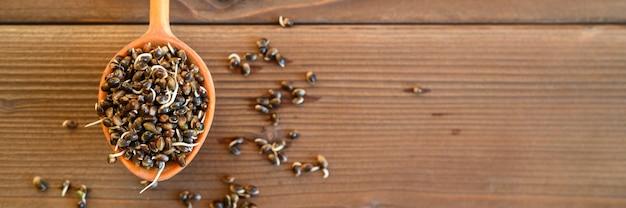 木製の背景に木のスプーンで発芽食品大麻の種子。バナー