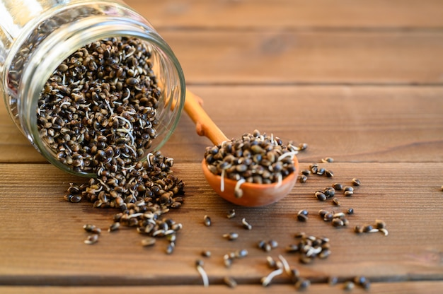 Sprouted food hemp seeds in a wooden spoon and glass jar