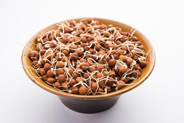 発芽したカラチャナまたは黒または茶色のひよこ豆-豊富なタンパク質のビーガン代替品であり、生きている酵素の含有量が高い