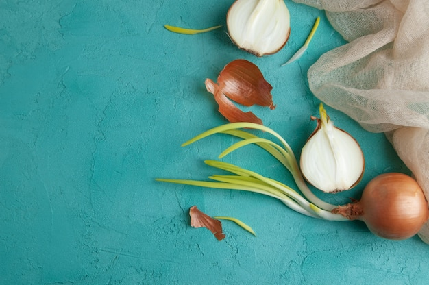 Sprouted onions on turquoise background.