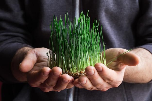 농부의 손에 발아 된 유기농 밀