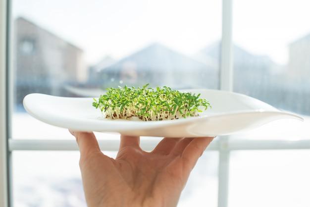 Проросшие семена. рассада семян кресс-салата. зелень