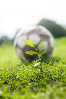 Sprouts and foot ball on green grass nature