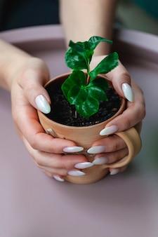 손에 클레이 컵에 arabica 커피 콩의 콩나물을