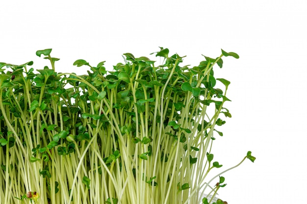 Ростки микро зелени на белом фоне