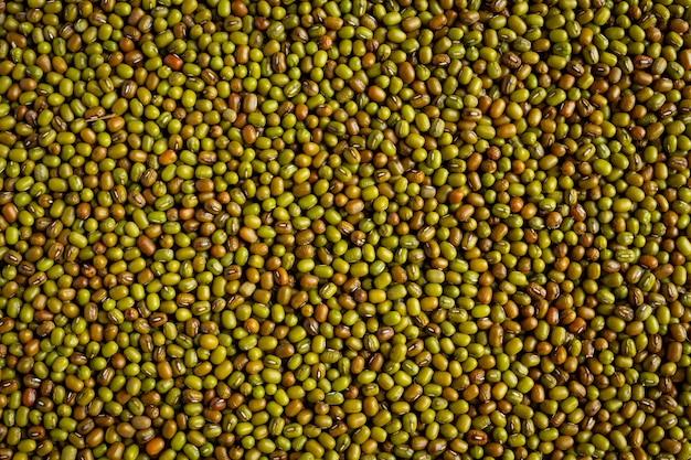 Sfondo di semi di germogli