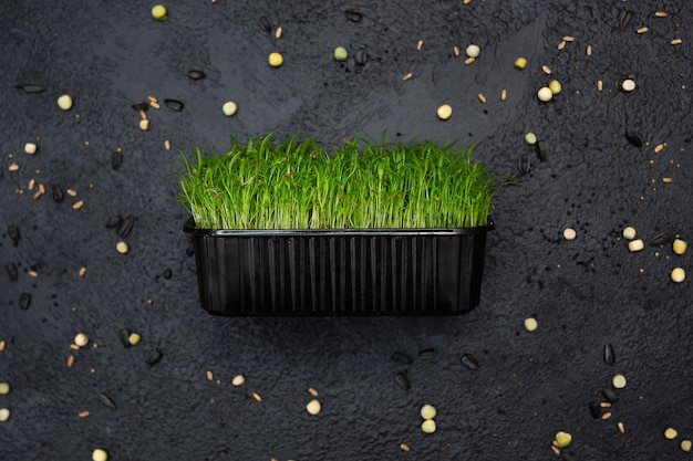 野菜にんじん、マイクロ、マイクログリーンを発芽させます。