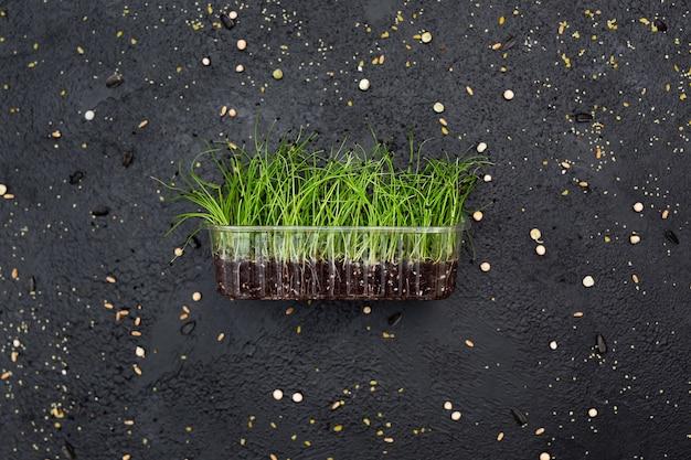 野菜タマネギ、マイクロ、マイクロジーンを芽キャベツ