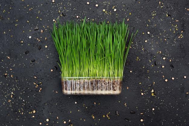 もやし野菜小麦、マイクロ、マイクロジーン
