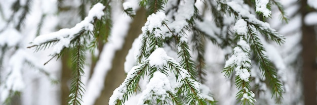 Еловая ветка новогодней елки засыпана снегом в заснеженном зимнем лесу.