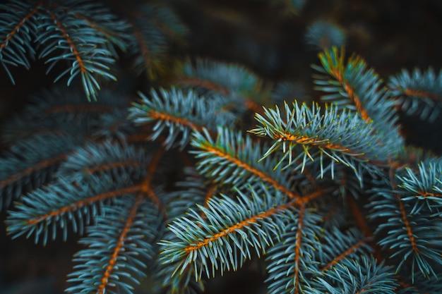 トウヒの枝の背景