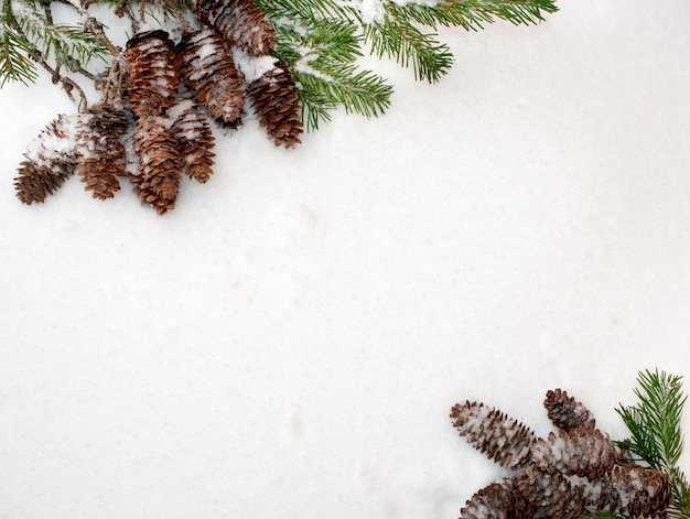 Spruce branches and cones, opposite each other, on the white snow.
