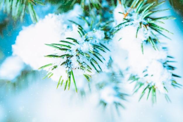 冬の森の雪とトウヒのクリスマスツリーの枝。芸術的なイメージをクローズアップ。自然な冬の背景。抽象的なクリスマスカード。
