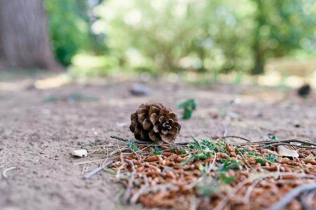 스프루스 콘은 자작 나무 catkins와 푸른 잔디 근처 바닥에 놓여 있습니다.