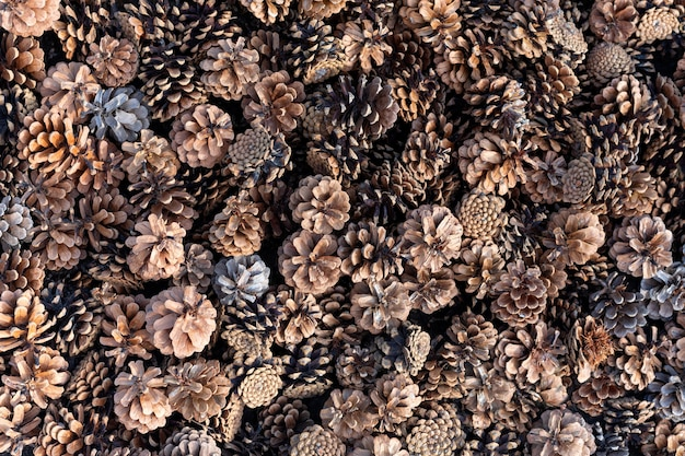 Spruce cones top view. natural background.
