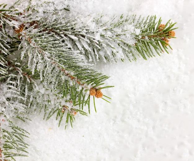 Ель, покрытая снегом