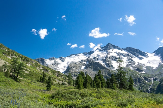 맑은 태양빛 여름날 높은 산의 언덕 쪽 초원에 있는 가문비나무 숲