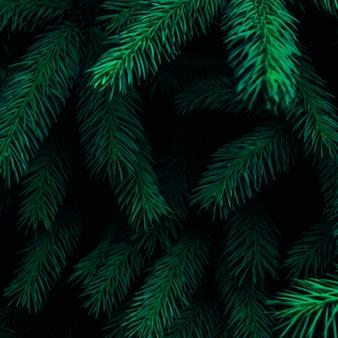 Spruce green background