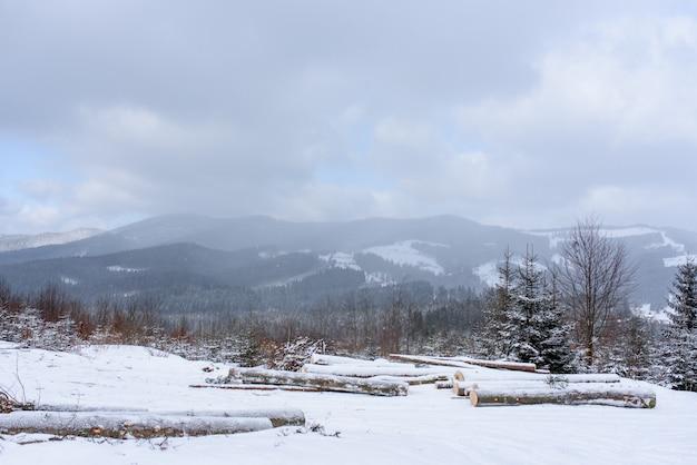 Еловый горный лес покрыт снегом.