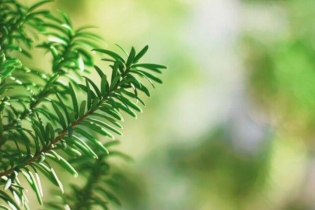 抽象的な自然環境の概念としてのトウヒの木の枝