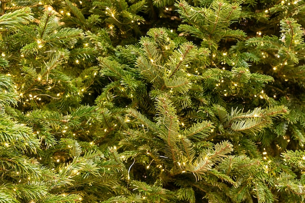 Spruce tree with garland. new year and christmas background.