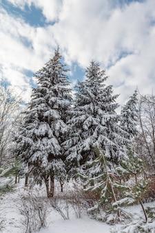 晴れた冬の日に雪に覆われたトウヒの木と青い空が表面に