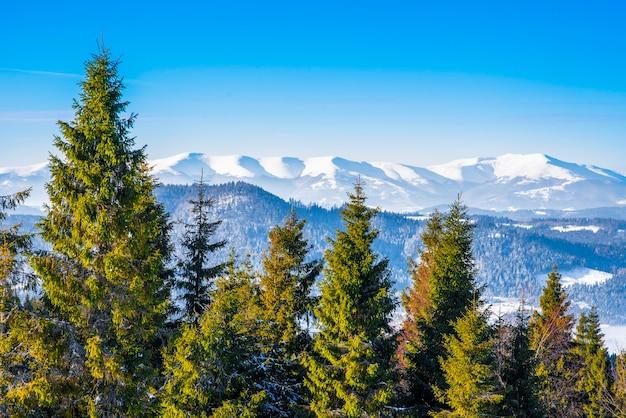 山々を見下ろすトウヒの冬の森