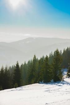 산이 내려다 보이는 가문비 나무 겨울 숲