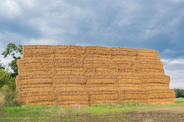 들판의 정사각형 베일, 겨울용 건초 만들기, 여름 베일, 농업