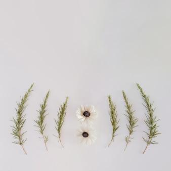 花とcopyspaceと正方形のデザイン