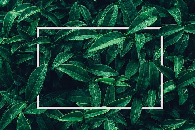 정사각형 프레임 열대 꽃과 종이 카드 메모가 있는 잎으로 만든 창의적인 레이아웃 플랫 레이