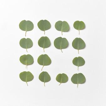 明るい灰色の壁、コピースペースにユーカリ植物の常緑の新鮮な自然の葉を持つ正方形のフレーム。フラットレイ