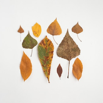 Square from autumn leaves