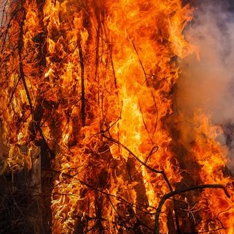 광장의 불, 밤에 붉은 색과 오렌지색 색상의 산불 불타는 나무.