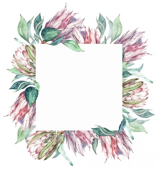 Square pink protea frame. watercolor exotic floral illustration.