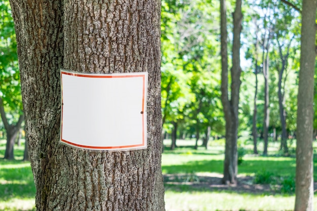 Square signboard, tablet, mockup on tree trunk in park.