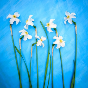 Square spring card with delicate white daffodils on a blue surface