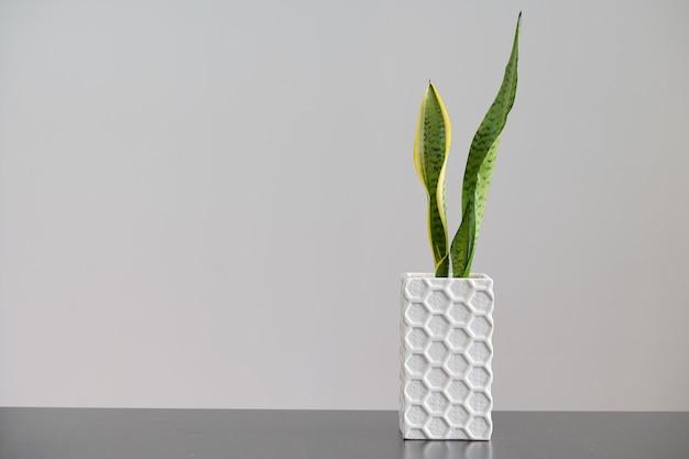 テキスト用のスペースと白い背景の上の植物の正方形の花瓶