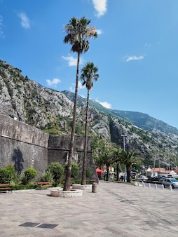 Square with palms in kotor, montenegro