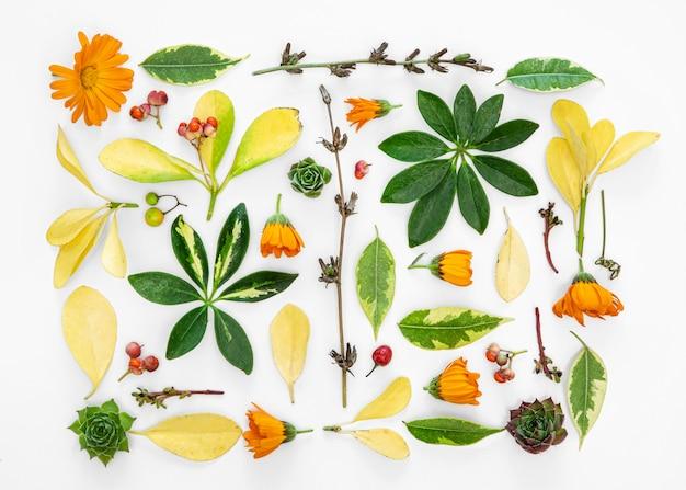 제곱 된 꽃 컬렉션 무료 사진