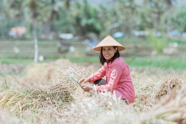 밭에서 벼를 수확 한 후 정제를 사용하는 여성 농민들 쪼그리고 앉기