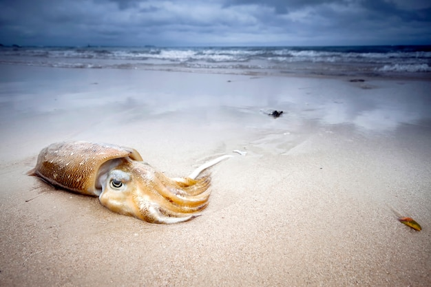 Squid lies on the beach in the sand cloudy sky