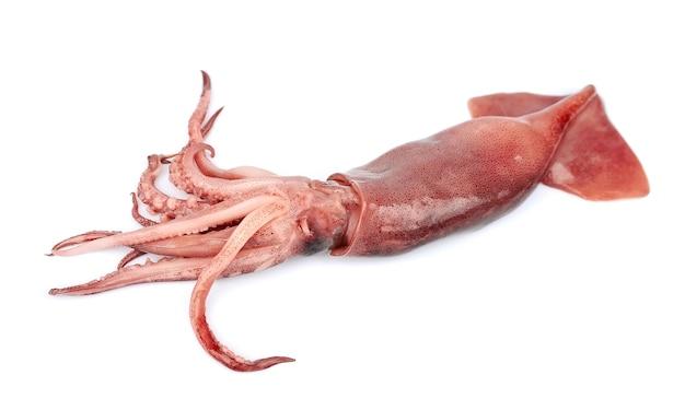 Кальмары морепродукты, изолированные на белом фоне