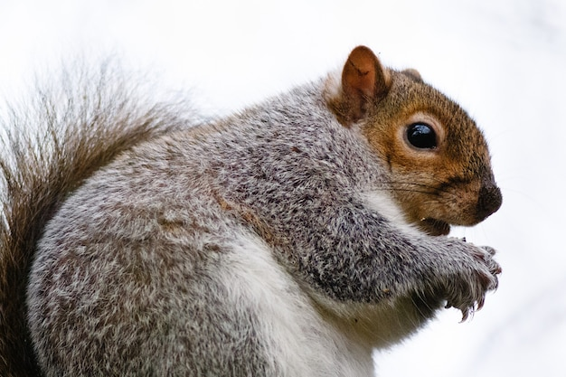 Squirrel captured during the daytime