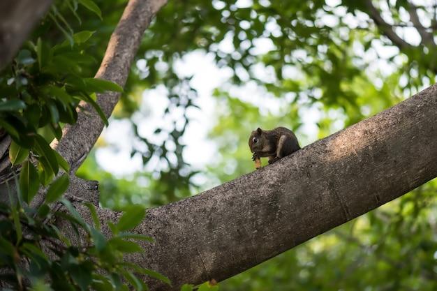 다람쥐는 녹색 잎사귀 배경을 가진 나뭇가지에 땅콩을 씹습니다. 봄에 숲에서 야생 동물입니다.